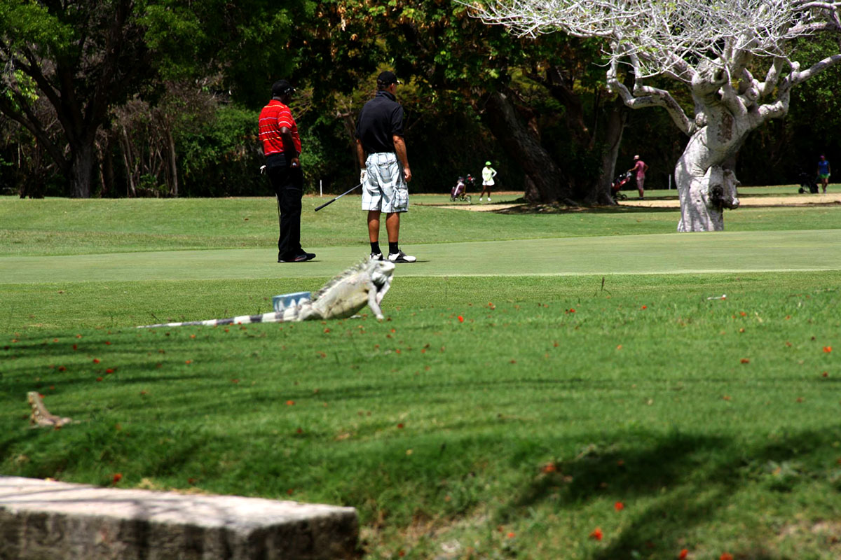 Curaçao-Golf-Squash-Club.jpg